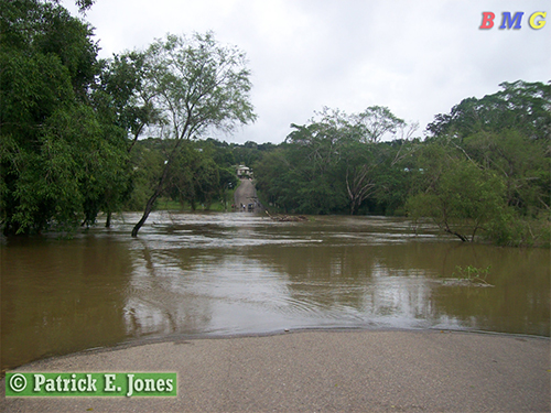 Macal River in San Ignacio is flooded