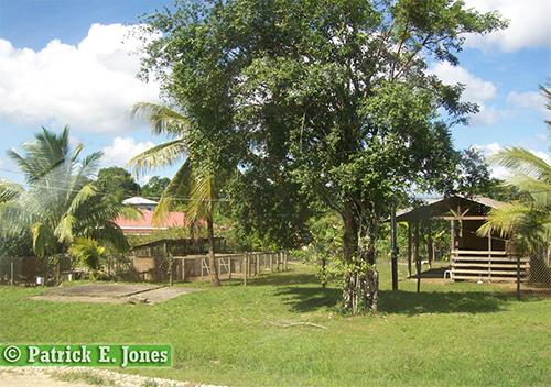 St. Matthew Village, Cayo District.