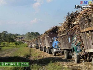 Belize Sugar Industry impasse continues