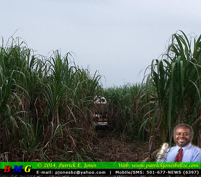 Bus ends up in cane field
