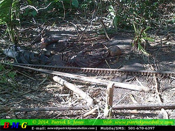 Decomposed body found (Guinea Grass/Shipyard road)