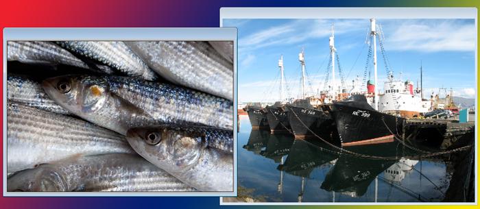 EU Fishing Ban on Belize