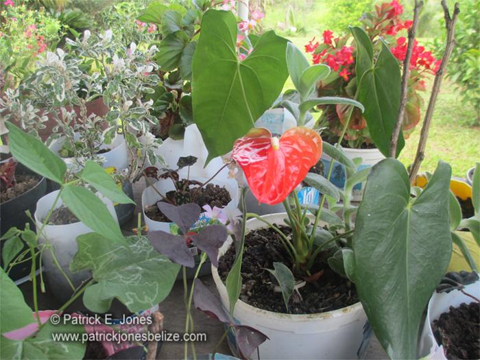 Flowers & Plants (San Marcos village)