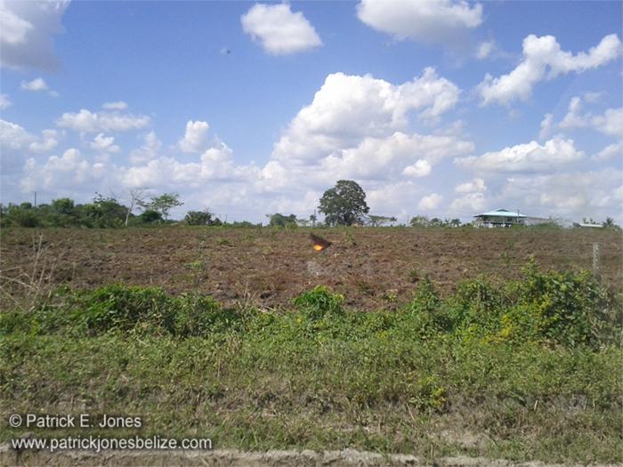 Freshly tille field (Spanish Lookout)