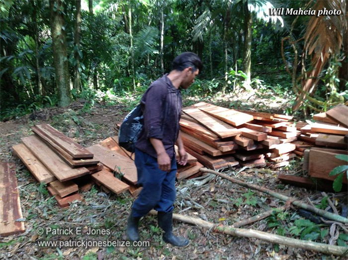 Illegal Rosewood  (Courtesy Wil Maheia)