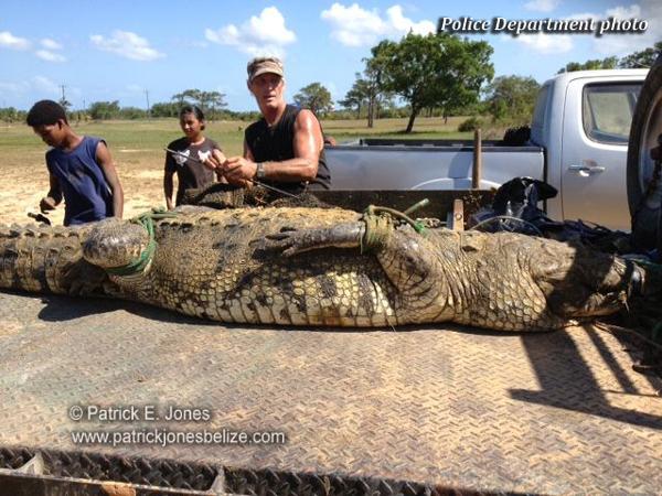 """""""Killer Croc"""" captured"""