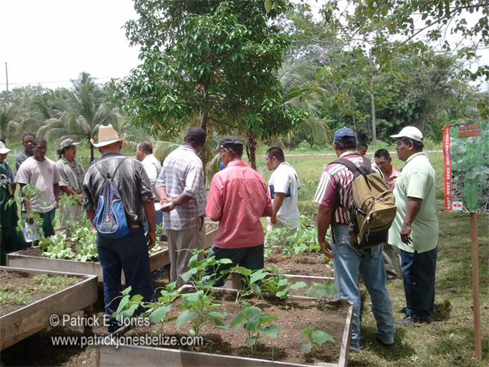 Vegetable farmers training