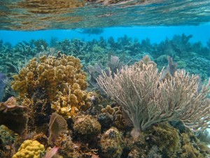 World Wildlife Fund warns of Impact of Oil Exploration to Belize Barrier Reef