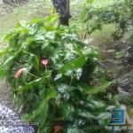 Rainy day in Belmopan