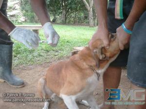 Anti-rabies vaccination