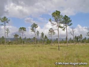 FILE: Southern Belize