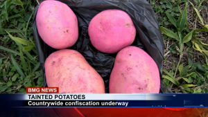 Dyed potatoes