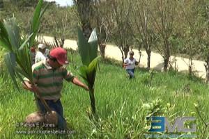 Belize Territorial Volunteers