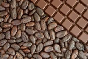 7686329-colegio-de-abogados-de-habas-de-cacao-y-chocolate
