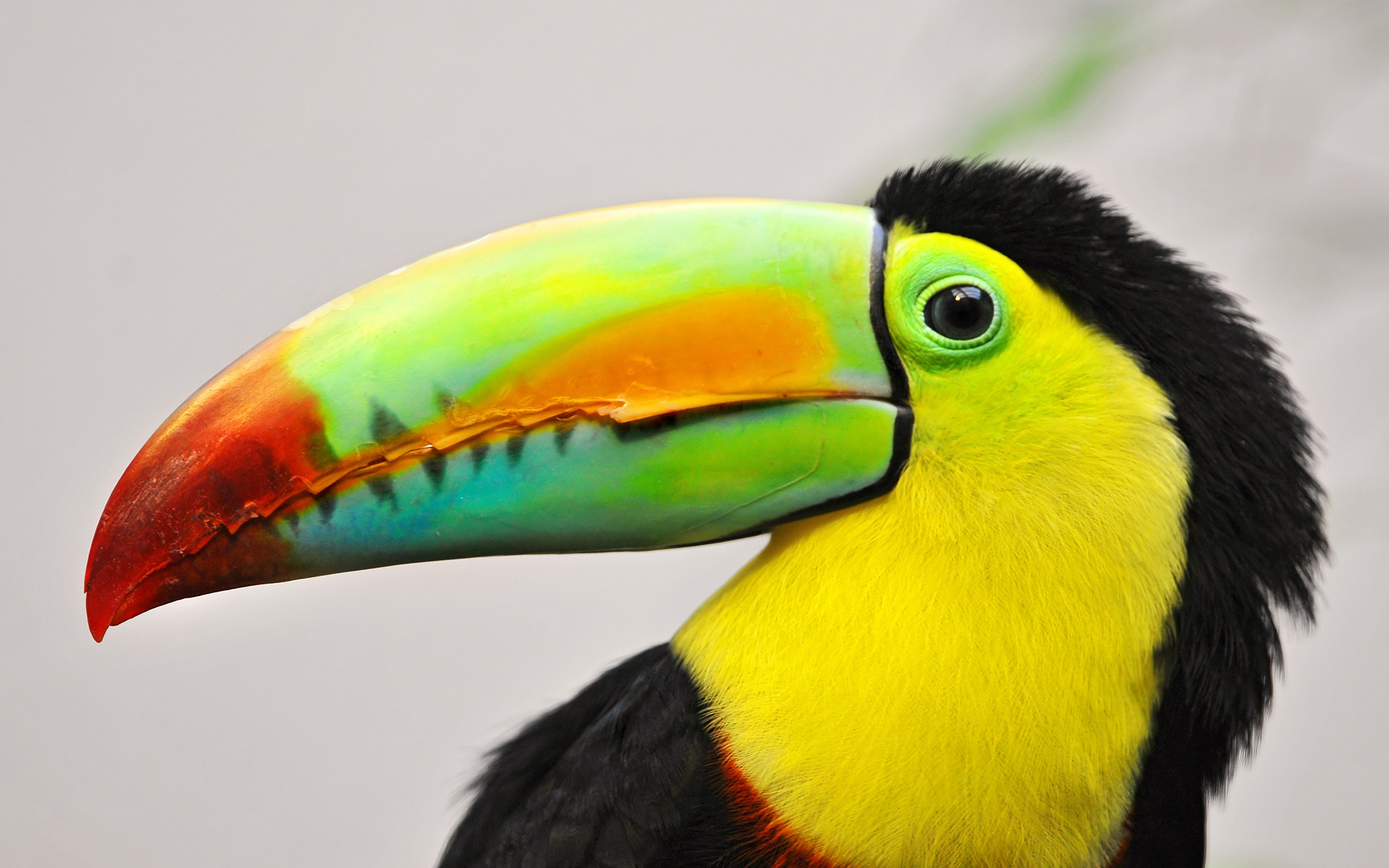 How the Kingdom of Toucan Was Sold Down the River by an ...
