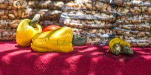 Belize-cashew-festival-in-crooked-tree-village