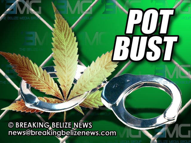 weed bust