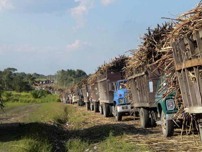46-Cane-farmers-02