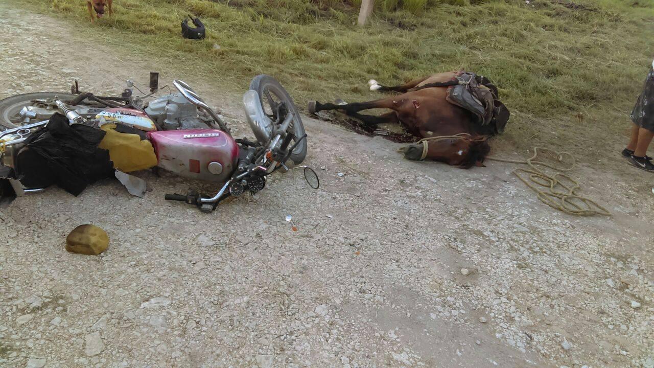 Car Accident Involving A Horse