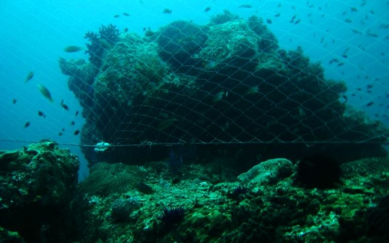 GOB takes limited action against gill nets, Oceana not impressed