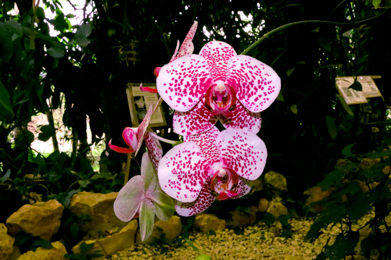 The Botanical Garden at Caves Branch Jungle Lodge: A tour through Nature's kaleidoscope