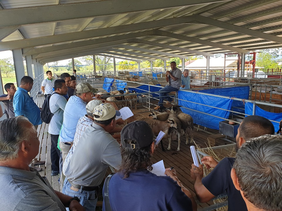 Belize receives over $700,000 from Taiwan for phase 2 of the sheep and goat project