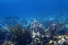 Marine Conservation and Climate Adaptation project