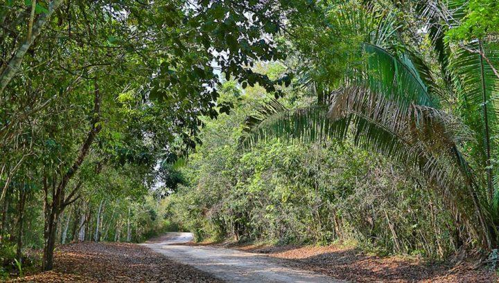 el pilar road