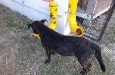 Corozal pet organization builds feeding stations for furry friends